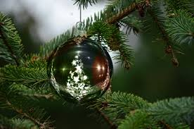 5 tips to keeping a fresh cut christmas tree fresh enter here canada