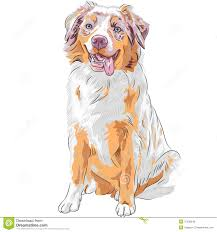 australian shepherd illustration australian shepherd illustration cartoon vector cartoondealer