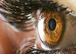 Blind Spot In Left Eye Blind Spot In Vision Answers On Healthtap
