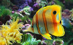 fishes sealife sea fish nature underwater moving tank