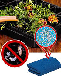 gnat guard buy from gardener u0027s supply