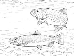 brown trout coloring free printable coloring pages