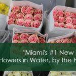 wholesale flowers miami jet fresh flower distributors wholesale flowers miami wholesale