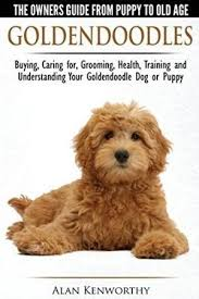 how to cut a goldendoodles hair best 25 goldendoodle grooming ideas on pinterest goldendoodle