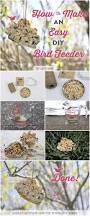 brightnest make a cookie cutter bird feeder in 8 simple steps