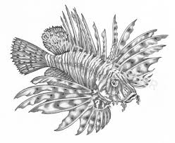 fish stippling google search drawing pinterest stippling