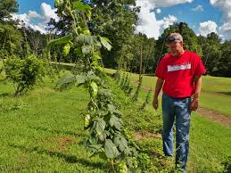 hops central virginia ag spotlight
