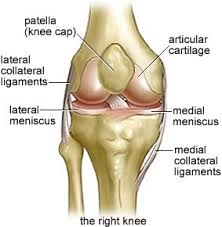 Anatomy Of Knee Injuries Acl Solutions Acl Knee Anatomy And Diagram Images