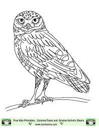 free printable coloring pages of elves elf owl coloring pages elf owl coloring page free printable elf owl