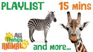 african animals animals playlist for children kids videos