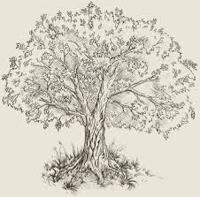 tree sketch illustrations pinterest tree sketches sketches