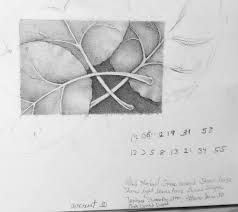 the memory of aspen leaves in autumn carol u0027s drawing blog