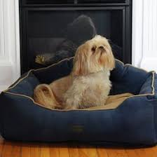 dog beds you u0027ll love wayfair