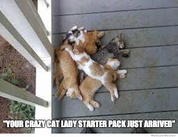 Crazy Cat Lady Memes - crazy cat lady starter pack weknowmemes