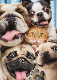 dog cat photo booth fun pop up stand out funny birthday card by