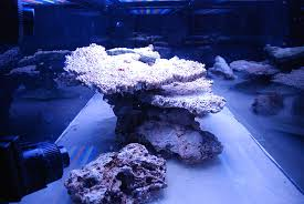 Aquascaping A Reef Tank How Does My Aquascape Look Reef Central Online Community