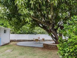 backyard with patio and large mango tree growing mango trees in