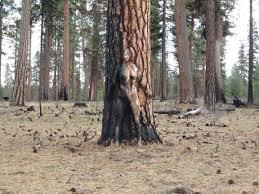 tree camouflage painting natalie fletcher
