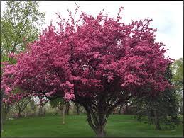 crabtree stephi gardens