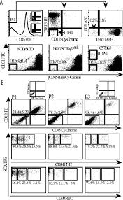av jennings house floor plans in vivo contribution of murine mesenchymal stem cells into