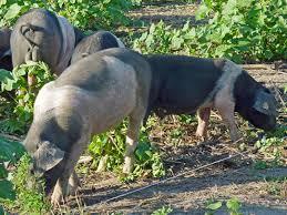 animals carnivore herbivore or omnivore science made simple