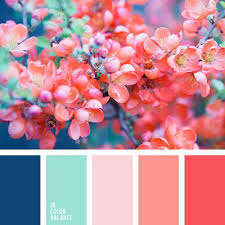 Beautiful Color Combinations 25 Best Pink Color Schemes Ideas On Pinterest Spring Color