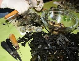 cuisiner les berniques le fricot d jambes de catherine noirmoutier les humeurs de l île