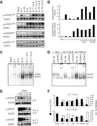 six principles of idea il 6 in synergy with il 7 or il 15 stimulates tcr independent