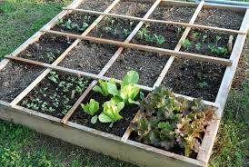 Square Foot Garden Layout Ideas Better For Planting Square Foot Gardening Vs Row Gardening