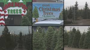 the cost of christmas trees in abq krqe news 13