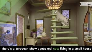 there u0027s a european show about real cats living in a small house