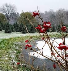 snowshoe valley christmas tree farm home facebook