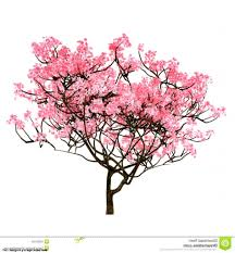 cherry blossom tree drawing drawing art gallery