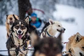 Dog sledding Picture of British Columbia Canada TripAdvisor