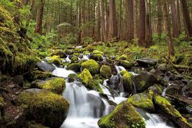 Elwha Dam Rv Park Reviews by Insider U0026rsquo S Guide To Olympic National Park Places To Stay In