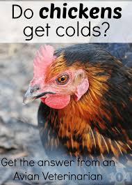 Can I Raise Chickens In My Backyard 251 Best Animal Husbandry Images On Pinterest Backyard Farming