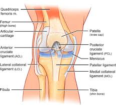Lateral Patellar Ligament Lateral Collateral Ligament Injury The Knee