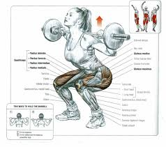 Muscles Used During Bench Press Muscles Involved In The Squat All About Powerlifting