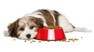 feeding your puppy commercial dog food the pros and cons of