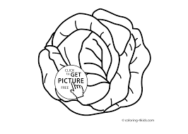 cabbage vegetable coloring page for kids printable coloing