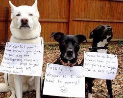 16 best doggie thanksgiving photos