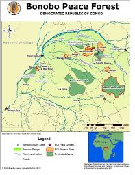 Congo River Map Photos From Save Endangered Bonobos In The Congo Rainforest