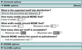 Meme Motif Search - motif based analysis of large nucleotide data sets using meme chip