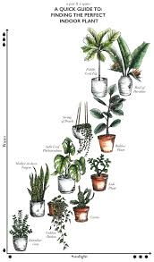 hero houseplants that thrive even in really dark rooms track
