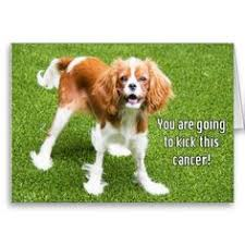 missing you puppy cavalier king charles spaniel card king charles