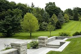 Tree Ideas For Backyard Step Landscaping Evergreen Landscaping Ideas Landscape Traditional