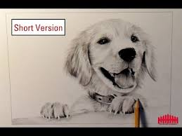 pencil drawing dog 1 how to draw fur short version youtube