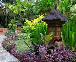 backyards enchanting backyard tropical garden house design with
