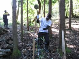 viking mat駻iel de bureau しいたけの森プロジェクト 収穫祭の巻 準備中
