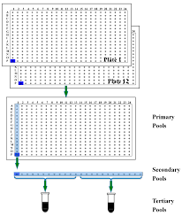 ijms free full text construction and characterization of three